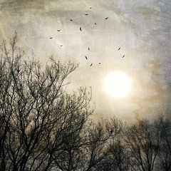 December sun. (jeanne.marie.) Tags: branches sky silhouettes flyingflight birds trees treescape mydailywalk iphone7plus iphoneography textured december winter sun