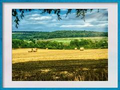 Yorkshire Hay (Mallybee) Tags: lumix panasonic gf3 425mm prime mallybee yorkshire summer hay m43 f17