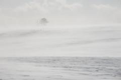 3151 (Keiichi T) Tags: 木 canon tree light cloud eos 日本 吹雪 snow 冬 6d 雪 snowstorm japan 光 winter 雲
