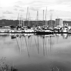 Reflections on a Grey Day (Melinda * Young) Tags: sailboats masts monochrome blackandwhite hulls building highrise marina boats dock mountains hills sky water bay ripples reflections weeds shore overcast morning clouds