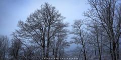 Thorold Ontario 2019 (John Hoadley) Tags: seburnrd thorold ontario 2019 january canon eosr 24105 f8 iso200 trees bluehour