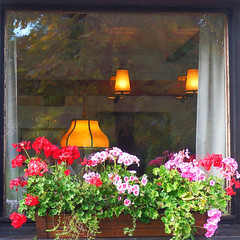 Ventana con flores,lámparas y reflejos - Window with flowers, lamps and reflections (nuska2008) Tags: nuska2008 nanebotas berchtesgaden baviera alemania ventana flores maceta reflejos window reflections olympussz30mr lámparas flowers tulipas