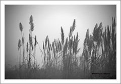 Standing tall.. (V Dhyani) Tags: earlymorningview morning plants wildgrass grass