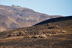 Leo Carrillo - Post Fire (ronkacmarcik) Tags: leo carrillo malibu california burn nikkor8020028 woolsey fire