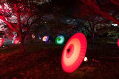 20181124_191735_2 (gugu800) Tags: 東京都 日本 jp 旧芝離宮恩賜庭園 港区 tokyo minatoku