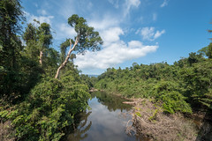 53452-Khao-Yai (xiquinhosilva) Tags: 2017 dongphayayen haewnarok hintung khaoyai mueangnakhonnayokdistrict nationalpark park thailand unescoworldheritage waterfall tambonnahinlat changwatnakhonnayok th