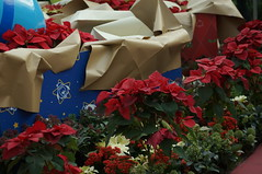 DSC00699- Red, Blue and Beige (oliveplum) Tags: poinsettiawishes2018 sony singapore leica60f28macro gardensbythebay decoration christmas flowerdome