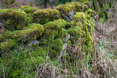 SJ1_4426 - Stone and moss (SWJuk) Tags: skipton england unitedkingdom swjuk uk gb britain yorkshire northyorkshire eastmarton banknewton countryside wall drystonewall moss green closeup 2019 jan2019 winter nikon d7200 nikond7200 nikkor1755mmf28 rawnef lightroomclassiccc
