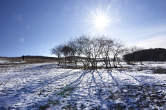 Tree lines (MelindaChan ^..^) Tags: innermongolia china 内蒙古 tree line chanmelmle mel melinda melindachan snow winter sun flare nature white 雪 plant chanmelmel 冰 bashang 壩上
