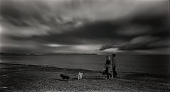 De paseo con los perros (Manuel Peña Jiménez) Tags: perros paseo playa nubes díanublado blancoynegro blackandwhite bw aguadulce roquetasdemar almería fujifilmxs1