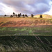 Sombras en la pradera