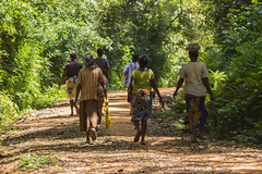 180919 Kakamega Forest National Reserve   -8497 (Serge Léonard) Tags: kakamegaforestnationalreservekenya kenya oiseaux transport avion continentafricain humain