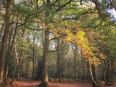 Shoal hill reserve, Cannock (cattan2011) Tags: autumn nationalpark sunset traveltuesday travelphotography travelbloggers travel natureperfection naturelovers naturephotography nature landscapephotography landscape shoalhillreserve cannock england
