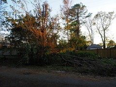 P9190744 (photos-by-sherm) Tags: hurricane florence recovery trees debris chain saws cutting wilmington nc north carolina coast fall