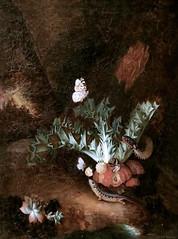 IMG_4008B Charles William de Hamilton 1668-1754. Bruxelles Augsbourg. Plantes, reptiles et insectes dans un sous-bois. Plants, reptiles and insects in an undergrowth. Avignon. Musée Calvet.  Tableau de l'entourage. (jean louis mazieres) Tags: nicolas mignard davignon 16061668 avignon peintres peintures painting musée museum museo france muséecalvet