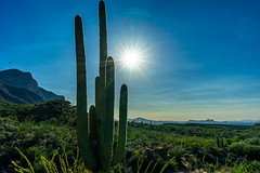 Saguaros & Sunshine in the Santa Catalina Mountains - Tucson, AZ (QuietRain31) Tags: tucson arizona desert desertscape sonoran saguaro cactus blue sky sun cacti mountains mountain landscape southwest flare ngc natgeo lonelyplanet