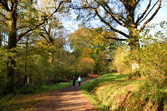 Deep In Conversation (Worthing Wanderer) Tags: nymans clouds autumn november sunny sussex westsussex park nationaltrust woodland woods forest