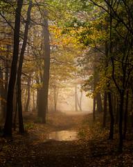 Pond (Petr Sýkora) Tags: les mlha podzim pond autumn forest nature trees fog mist light czech
