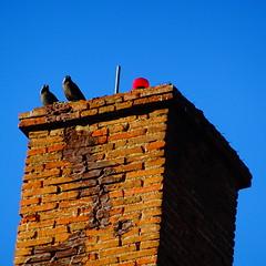 Τρικαλα DSC07872 (omirou56) Tags: 11 sonydschx60v ουρανοσ πουλια birds sky