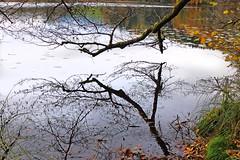 Spieglein, Spieglein im See . . . (rotraud_71) Tags: autumn trees reflections water lake höglwörth germany bavaria berchtesgadenerland scenicsnotjustlandscapes