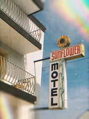 Sunflower motel (BLACK EYED SUZY) Tags: travel sunshine summer retro motel sunflower wildwood jerseyshore