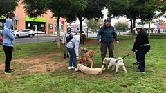IMG_8475 (Doggy Puppins) Tags: educación canina adiestramiento canino perro dog