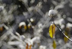Trioplan 100/2.8 (Vladimir Gazoukin) Tags: canada country close autumn vladimirgazoukin bokeh barrie forest snow
