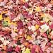 Autumn in Saxony