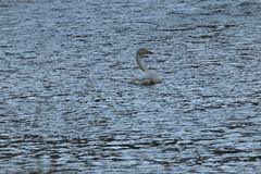 IMG_4711 (monika.carrie) Tags: monikacarrie wildlife scotland seatonpark