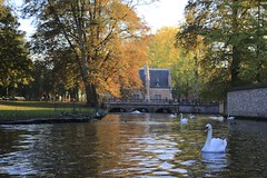 Geese charmed by witches in brugges (HSOBERON) Tags: hsoberon endor inc endorinc norebos hernansoberon geesse brugges lakes witches wather greatday day daylight naturallight canon canon70d nikkorlense 50mm