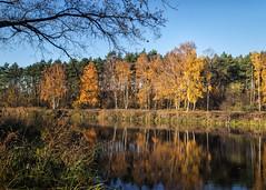 o2 (KRR_3) Tags: sony a6000 nex selp18105g lake pond autumn tree trees poznan poznań malta
