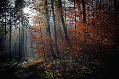 last autumn days (freiraum7) Tags: sony a7rii i a7rm2 fe 24105mm f4 g oss