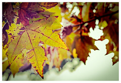 Autunno (Pepenera) Tags: autumn lautunno colors colore color