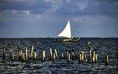Belize_san_pedro_Sailing