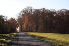 Limes Bikeway (wellandok) Tags: limes bikeway autumn fahrradweg