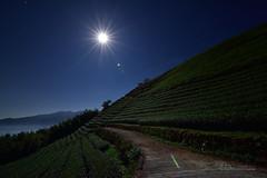 夜光茶園 (風景獵人) Tags: taiwan 台灣 風景 風景獵人 landscape 星軌 startrail 星跡 星空 sky night track 雲海 琉璃光 fog 月光 moon