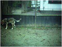 Neingrenze *274 (KKS_51) Tags: neingrenze5000t hund littledoglaughednoiret