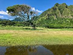 Both sides now (kimbar/Thanks for 4 million views!) Tags: oahu tree water reflection mountain green hawaii kualoaregionalpark