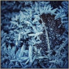 La marque de l'hiver (Charlottess) Tags: 2019 nikon5300 janvier givre hiver paca bouchesdurhône