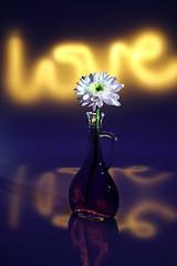 still-life 16-11-2018 001 (swissnature3) Tags: stilllife flowers light macro love