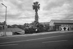 (Monsieur Marchi) Tags: leicam4p leitzsuperangulon21mmf34 wideangle hill funchal madeira portugal island palmtree woman road ilfordfp4 125 135 film blackandwhite bw