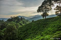 Illam, Nepal (Ben Perek Photography) Tags: illam nepal tea fields mountains sky green hills asia spectacular incredible interesting