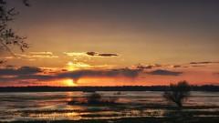 *** (pszcz9) Tags: polska poland przyroda nature natura naturaleza nationalpark parknarodowy ujściewarty zachódsłońca sunset woda water pejzaż landscape beautifulearth sony a77 drzewo tree