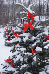 Bows and Boughs (Toats Master) Tags: tree pine spruce red bow bough snow