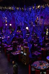 Vestidos para las fiestas (Manuel Gayoso) Tags: mexico arboles decoracion galería cafetería mesas violeta lucesdecolores