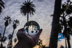 Lensball with the Sunrise and Palm Trees at Echo Park Lake (SCSQ4) Tags: california cloudyskies donutstreetmeet echopark echoparklake lensball losangeles morning palmtrees sunrise