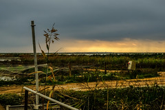 Veta la palma doñana (ameliapardo) Tags: vetalapalma doñana sevilla huelva andalucia atardecer cielo nubes colores fujixt2 fujinon70200