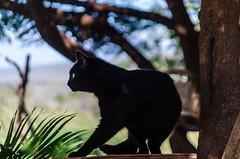 Silhouette (rao.anirudh) Tags: hawaii maui