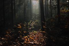 (Sietske de Graaf) Tags: wood autumn reallyniceimages presetfujinatura1600 filmsimulation rnifilms autumnmood fall fujinatura1600 light trees tree forest pentaxzoom3570mm herfst pentaxk50 autumnleaves
