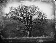 Tree (ttelyob) Tags: picmonkey tree artificialage